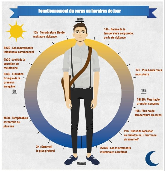 Infographie cycle du sommeil